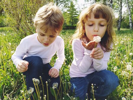 Boy and girl on the grass. Cute children pick meadow flowers and blow on dandelion seeds. Brother and sister are wearing white blouses and blue jeans. sunny weather in a city park. Recreation and communication in nature. Ecology, healthy lifestyle and nutrition concept
