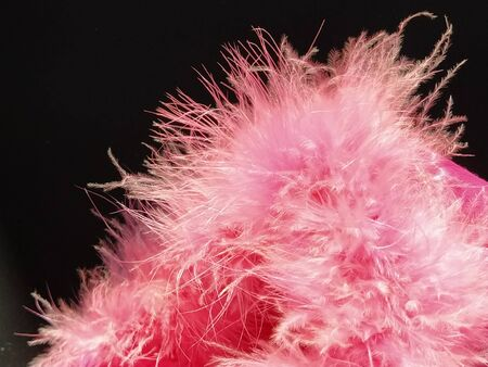 Delicate pink fluff on a black background. Real fur with a long pile. Close-up. Boa or cosmetic brush. Graceful details. Soft focus. Blurred image. Foto de archivo