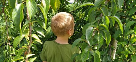 The boy pisses in the bushes. A child in a green T-shirt on a background of green bushes. Directing urination in a public place. Urinary incontinence or bad manners.
