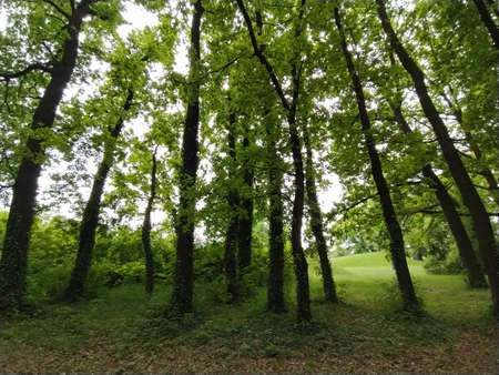 Deciduous forest. Subtropical or temperate continental climate. Creepers on tree trunks. Thick dark tree trunks. Parasitic plants encircled other plants. Under the canopy of the crown.