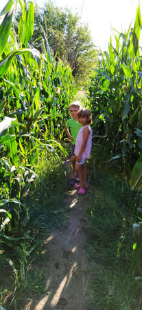 Children in the corn. A boy and a girl of 6 and 7 years old walk along the path between tall corn plants. Playing in the field. Looking into the camera. Summer time. Children with blond hair