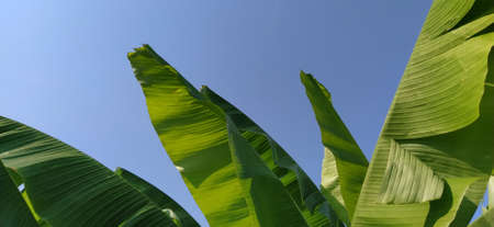 Palm branches and leaves against the blue sky. Tropical natural background.