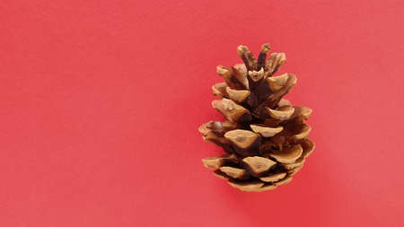 beautiful pine cone on a red background. New Year and Christmas decorations. Spruce or pine cone close up. Item on the right. Banner