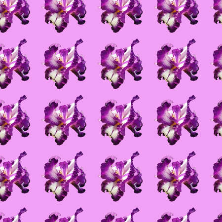 Pattern with purple iris flowers. Graceful iris flowers with white, purple petals, pistils and stamens on a pink background. Seamless repeating pattern. Stencil for fabric, wrapping or wallpaper.