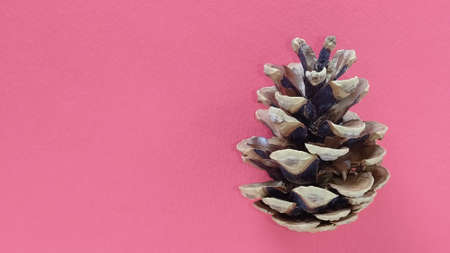 beautiful pine cone on a red background. New Year and Christmas decorations. Spruce or pine cone close up