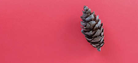 beautiful pine cone on a red background. New Year and Christmas decorations. Spruce or pine cone close up. Spruce cone on the right.
