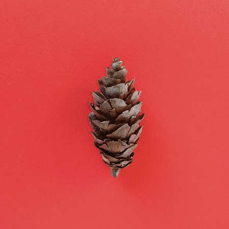 Spruce cone in the middle of the image.