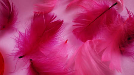Pink and crimson feathers as a background. Light curved fluffy feathers. Flamingo plumage. Colored feathers. Theme of Love, St. Valentine's Day.
