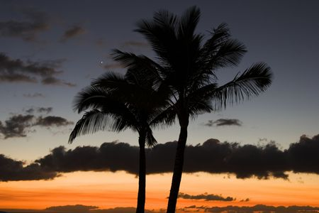 tonight: Venus winks over the tops of a pair of palm trees silhouetted against the last blush of sunset and the evening sky. Star light, star bright, first star I see tonight ... Stock Photo