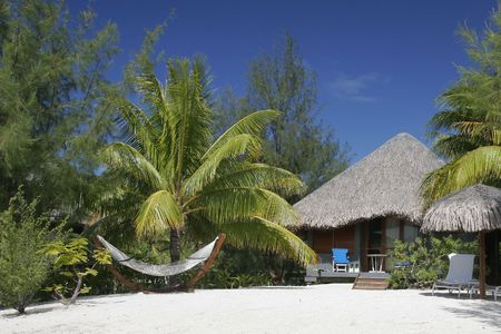 the seas: In the romantic south seas, on a white sand beach, a thatched roof bungalow and  rope hammock are surrounded by palm trees under a rich blue sky.
