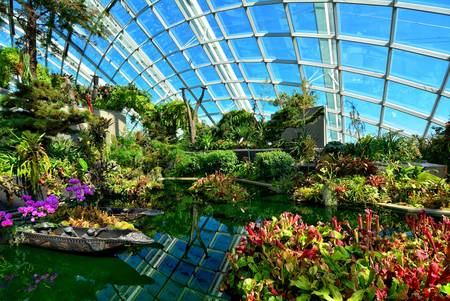 botanic: A photograph inside the Flower Dome in Gardens by the Bay in Singapore. Editorial