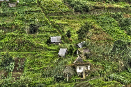 Hillside with terraces and village on the island of Madeira.