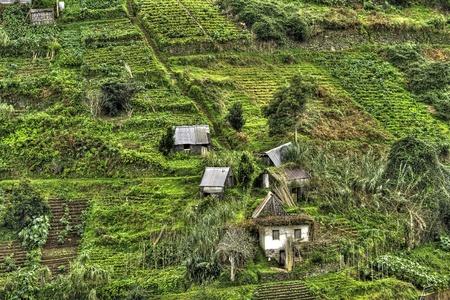 gradas: Las laderas con terrazas y el pueblo en la isla de Madeira. Foto de archivo
