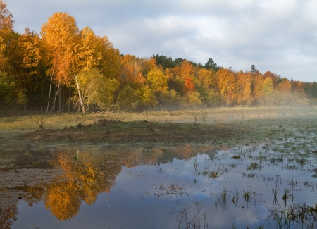 Wetlands in autumn with colourful trees  photo