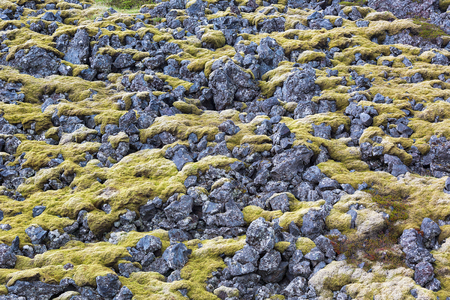 lava field: Moss covered lava field in Iceland.