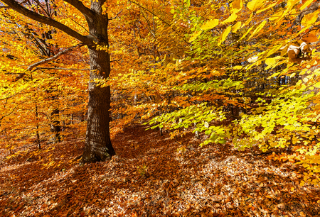 Forest in vibrant autumn colours.