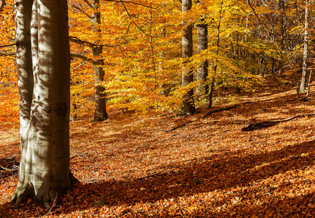 Swedish forest in autumn.