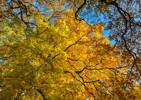 Yellow and orange trees in the forest in autumn.