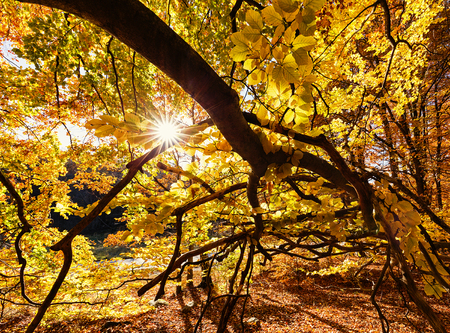 Sunshine through the forest in fall.