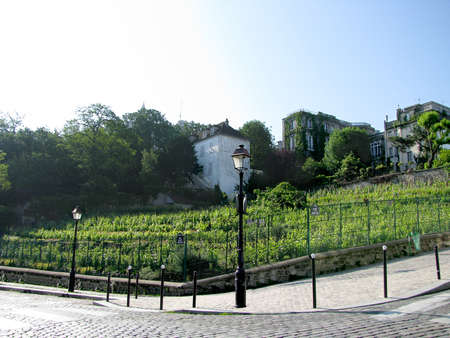 vineyards in the streets of Paris Stock Photo - 16853049