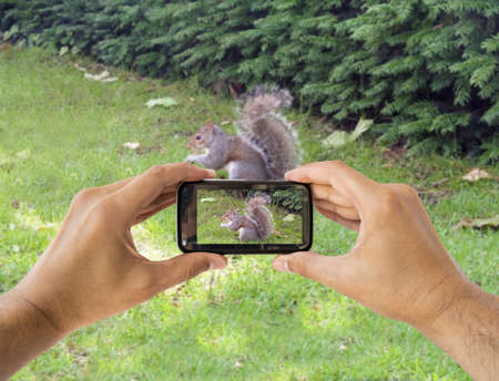 tourist holds up camera mobile at ST james park photographing a squirrel  in london england photo