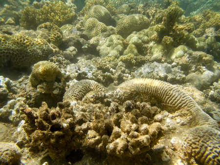 close up of small corals in read sea Stock Photo - 28959836