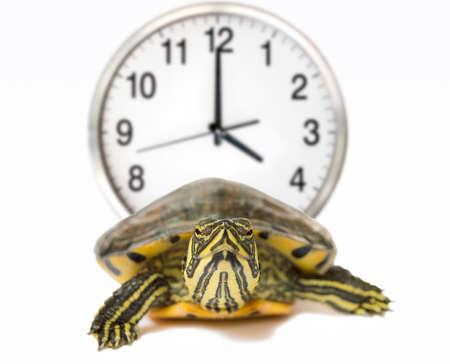 schildkroete: Schildkröte mit einer Uhr hinter haft langsam