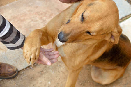 young dog sitting and shaking the paw with a hand of man as symbol of friendship and love between the pet and his owner