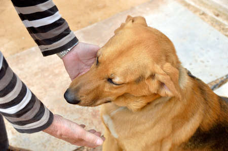 obedient: obedient dog sitting and shaking the paw with a hand of man as symbol of friendship and love between the pet and his owner Stock Photo