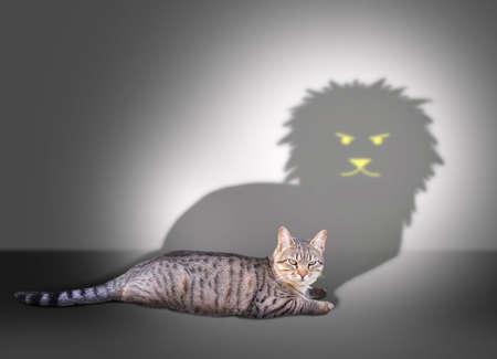 representations: Profile of a house cat casting a lion shadow on a white wall Stock Photo