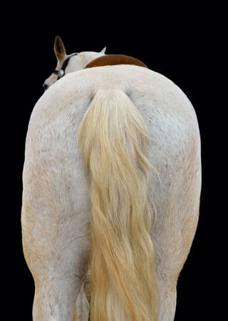 back of white horse with a black background