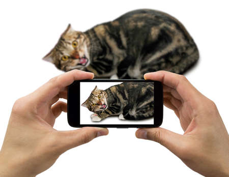 cat becomes aggressive when you make a picture with the phone