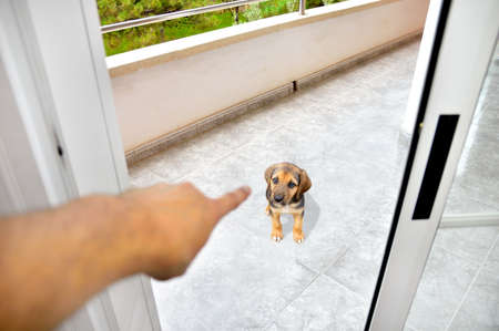 Person schimpft den Hund und umschließt ihn auf der Terrasse nach Hause als Strafe mit dem Finger zeigen
