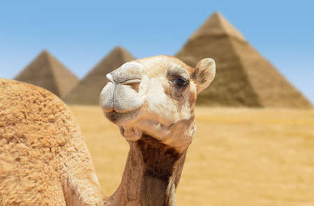A photo of the Giza Pyramids outside of Cairo, Egypt. An iconic image of ancient times and places.  Archivio Fotografico
