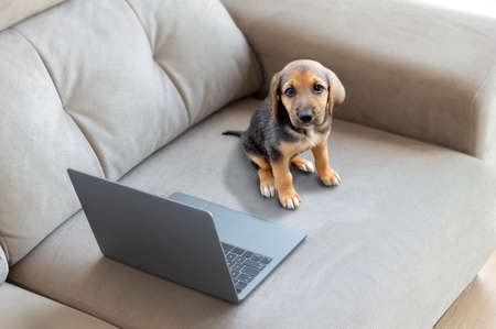 Cute dog with laptop on coach at home