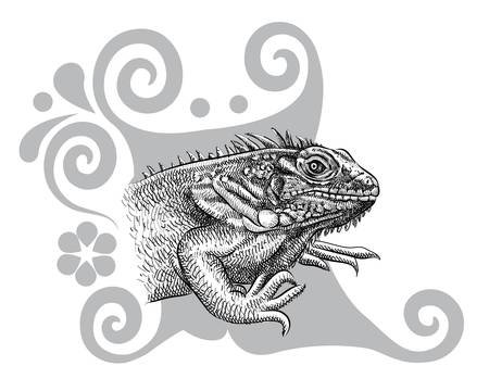 Iguana artistic drawing with curl decoration
