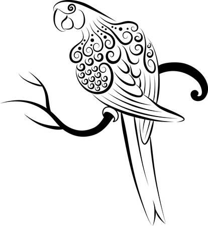 pajaro  dibujo: Loro ornamento Vectores