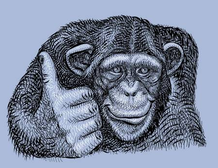 monkey face: chimpanzee artistic drawing