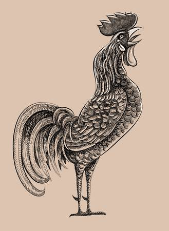 line drawing: Rooster drawing   Illustration