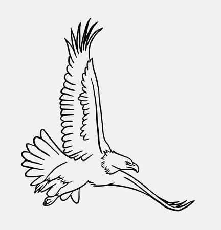 spontaneous: Eagle bird flying sketch, Good use for symbol, logo, web icon, mascot,