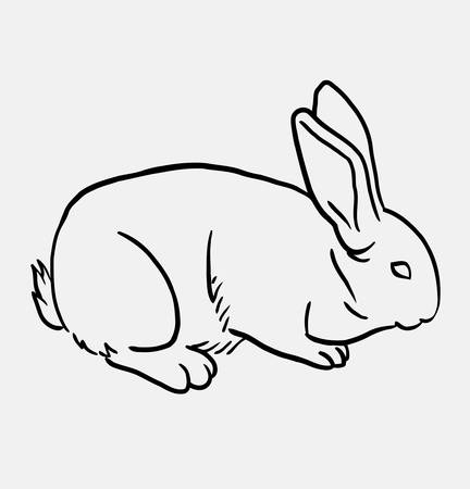spontaneous: Rabbit pet animal sketch . Good use for symbol, logo, web icon, mascot, or any design you want