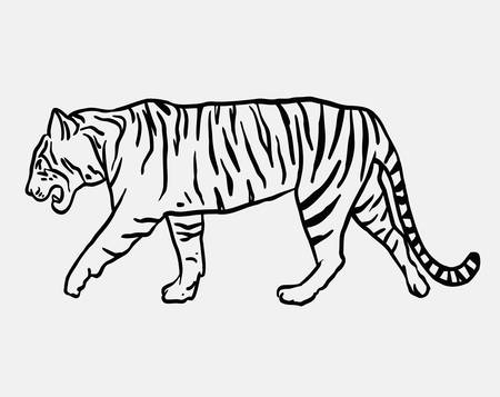 Tiger wild animal vector. Good use for symbol, logo, web icon, mascot, sign, or any design you want. Illustration