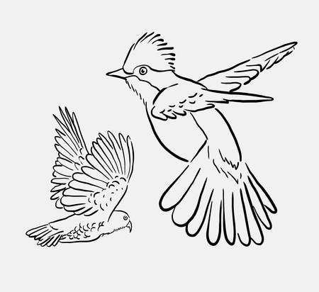 spontaneous: Bird animal flying drawing. good use for symbol, logo, web icon, mascot, sign, element, object, or any design you want.
