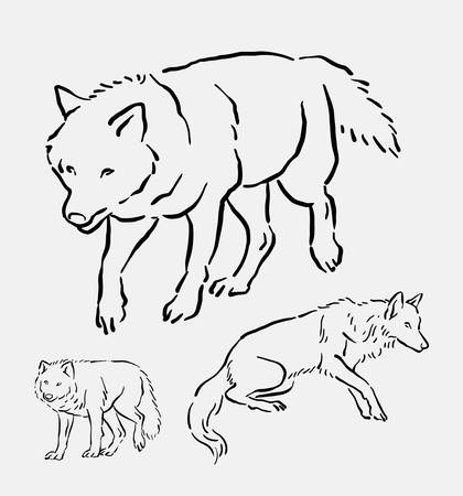 dog walking: Wolf walking pose hand drawing. good use for symbol, logo, web icon, mascot, sign, sticker, element, object, or any design you want.