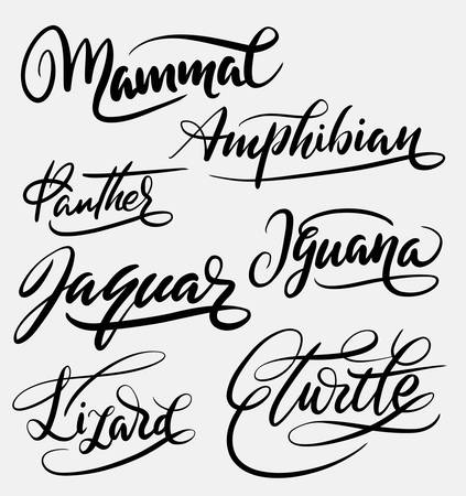 spontaneously: Mammal and amphibian hand written typography. Good use for logotype, symbol, cover label, product, brand, poster title or any graphic design you want. Easy to use or change color Illustration