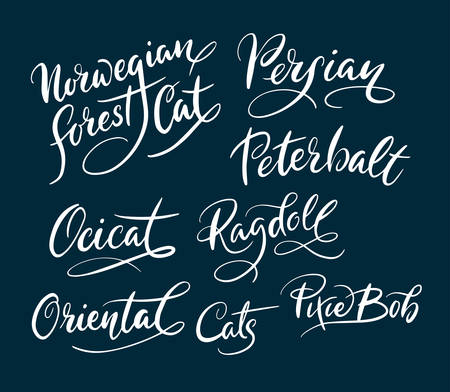 Oriental and persian cat animal hand written typography. Good use for logotype, symbol, cover label, product, brand, poster title or any graphic design you want. Easy to use or change color