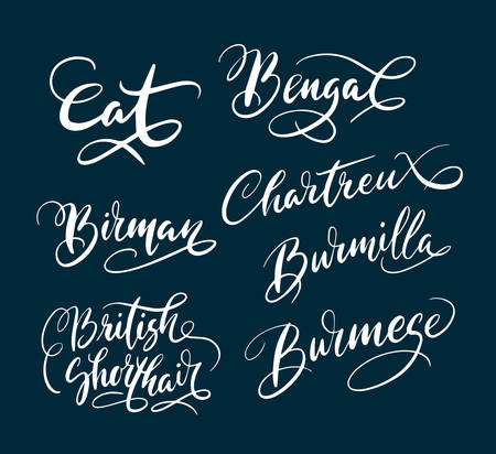 Bengal and birman cat pet animal hand written typography. Good use for logotype, symbol, cover label, product, brand, poster title or any graphic design you want. Easy to use or change color