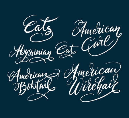 wirehair: American curl cat pet animal hand written typography. Good use for logotype, symbol, cover label, product, brand, poster title or any graphic design you want. Easy to use or change color