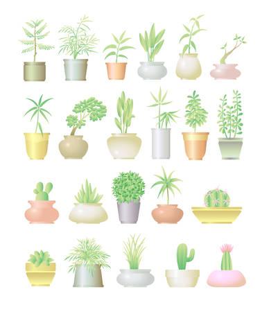 Plants in pot decoration