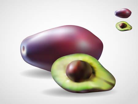 Avocado realistic vector gradient mesh